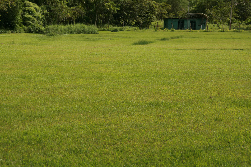 Green fields of Jamaica