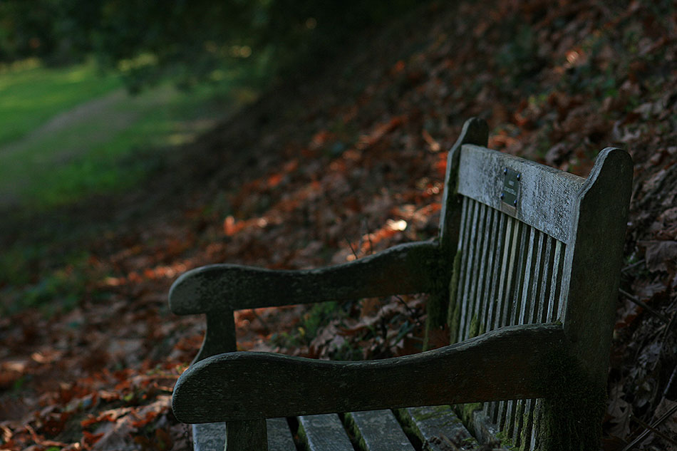 Bench adrift in leaves