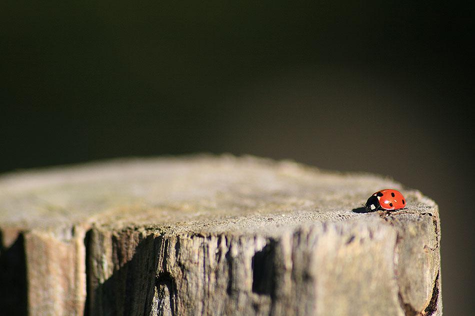 Ladybird log